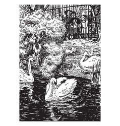 ugly duckling vintage vector image vector image