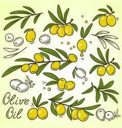 Olive brances set vector