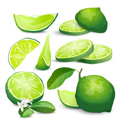 lime collection vector image vector image