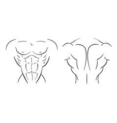 Bodybuilder torso line-art vector