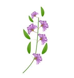 Bunch of purple crape myrtle flowers vector