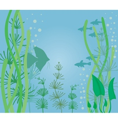 fish tank vector image
