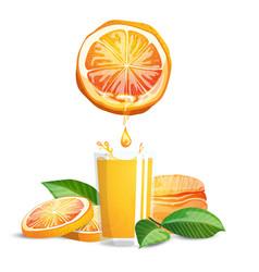 oranges and juice vector image
