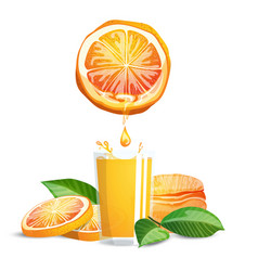 Oranges and juice vector