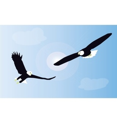 Two white tailed eagles are fighting in mid air vector