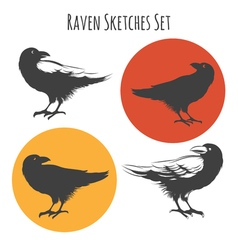 Raven or black crow bird ink drawing sketch with vector
