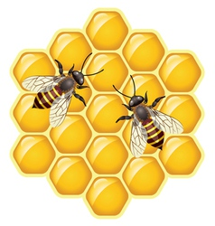 bees on honeycells vector image