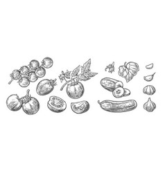 cucumbers garlic and tomato vector image