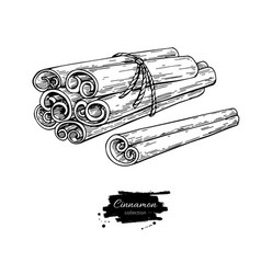 Cinnamon stick tied bunch drawing hand vector