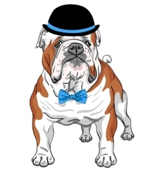 hipster dog English Bulldog breed vector image vector image