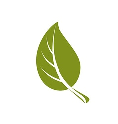 Simple flat green deciduous tree leaf stylized vector image vector image
