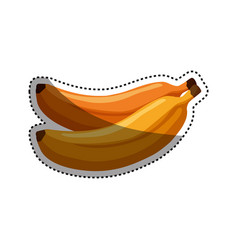 Delicious bananas fruit vector