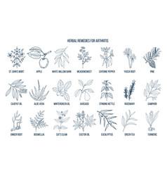 best herbal remedies for arthritis vector image vector image