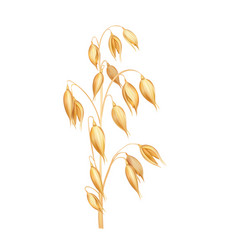 oat spikelet realistic vector image