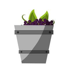 Fresh delicious grape fruit vector
