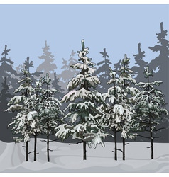 Winter forest with fir trees vector