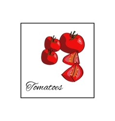 Tomato Isolated drawn vegetables on white vector image