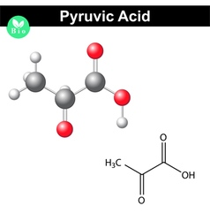 Pyruvic acid molecule vector