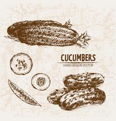 Digital detailed line art cucumber vector