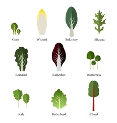 Set of salad bowl Leafy vegetables green salad vector image vector image