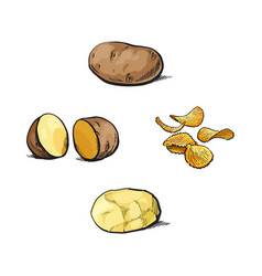 Whole cut peeled and unpeeled potato and chips vector