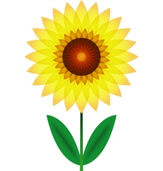 Beautiful sunflower for design vector