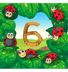 Six ladybugs on leaves with number 6 vector image