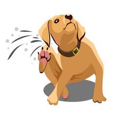 Dog dander vector