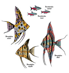 Colorful drawing aquarium fishes set vector