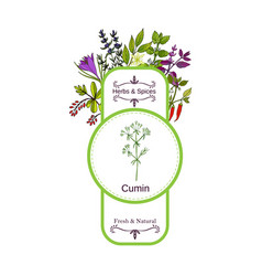 Vintage herbs and spices label collection cumin vector