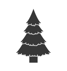 Pine tall tree vector