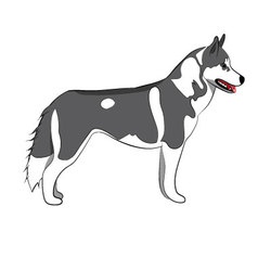 Husky body vector