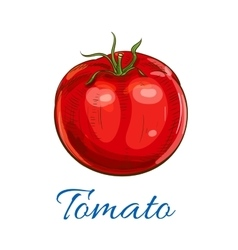 Fresh ripe red tomato with leaves sketch icon vector image vector image
