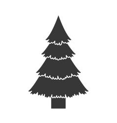 Pine tall tree vector