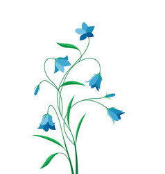 Summer flower campanula vector