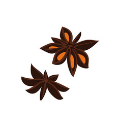 Anise seed isolated icon vector