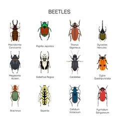 Bugs set in flat style design different vector