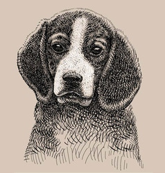Dog drawing vector image