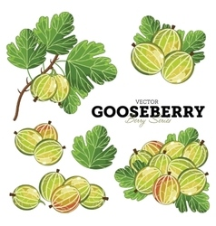 Gooseberry set vector