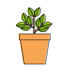 house plant in pot vector image