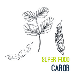 carob super food hand drawn sketch vector image vector image