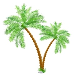 Tropical palm tree over white vector image