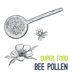 bee pollen super food hand drawn sketch vector image vector image