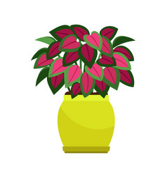 coleus house plant in flower pot vector image vector image