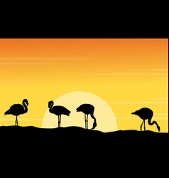 silhouette of flmingo lined at sunset scene vector image