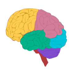 colorful brain vector image