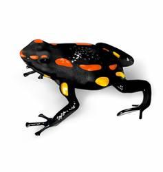 Rio santiago poison-dart frog vector