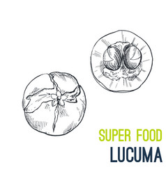 lucuma super food hand drawn sketch vector image
