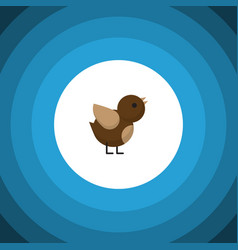 isolated sparrow flat icon bird element vector image