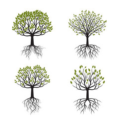 set green tree with roots vector image vector image